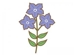 紫色の桔梗(ききょう)のイラスト
