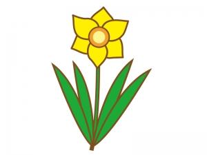 黄色いスイセンのイラスト02