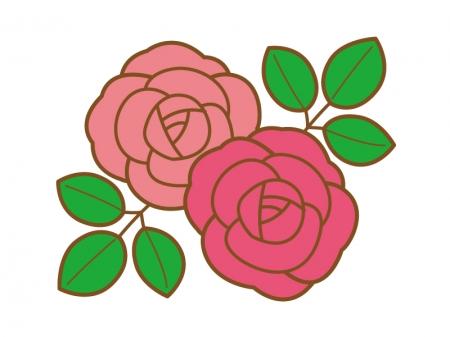 ポップなピンク色と赤色のバラのイラスト