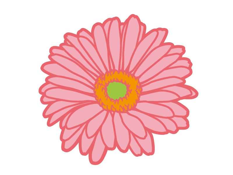 ピンク色のガーベラのイラスト