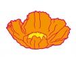 オレンジ色のポピーの花びらのイラスト