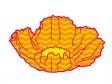 波模様のオレンジ色のポピーの花びらのイラスト