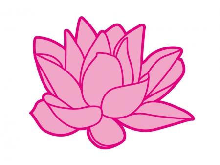 ピンク色のスイレンのイラスト