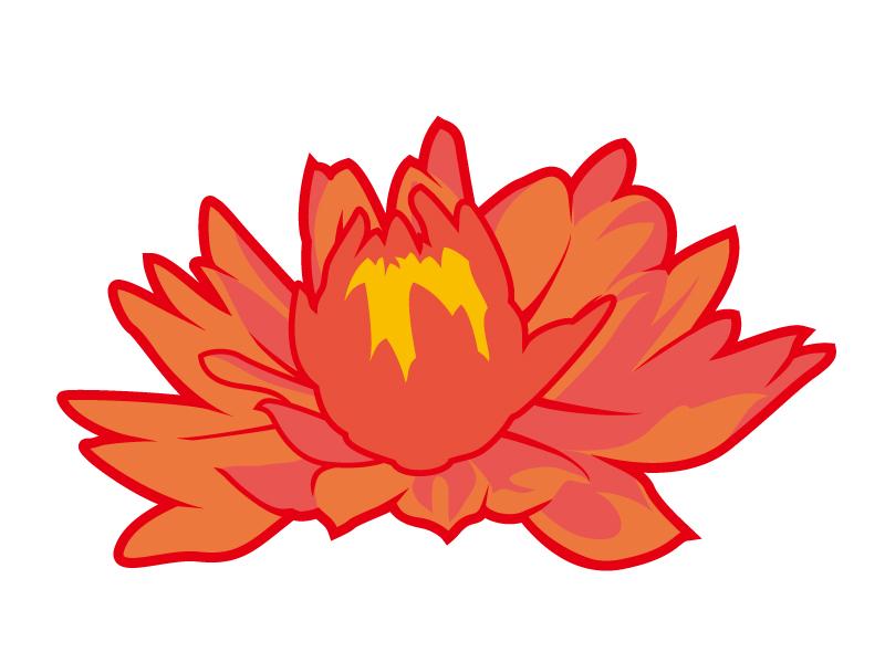 オレンジ色のダリアのイラスト