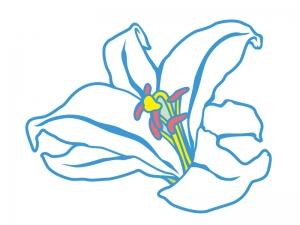白いユリの花びらのイラスト