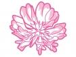 ピンク色のレンゲソウ(蓮華草)の花びらのイラスト