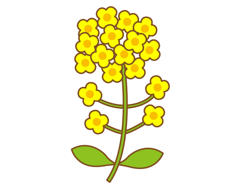鮮やかな黄色の菜の花のイラスト