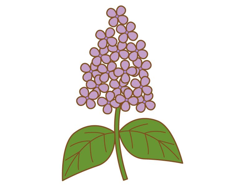 紫色のライラックのイラスト