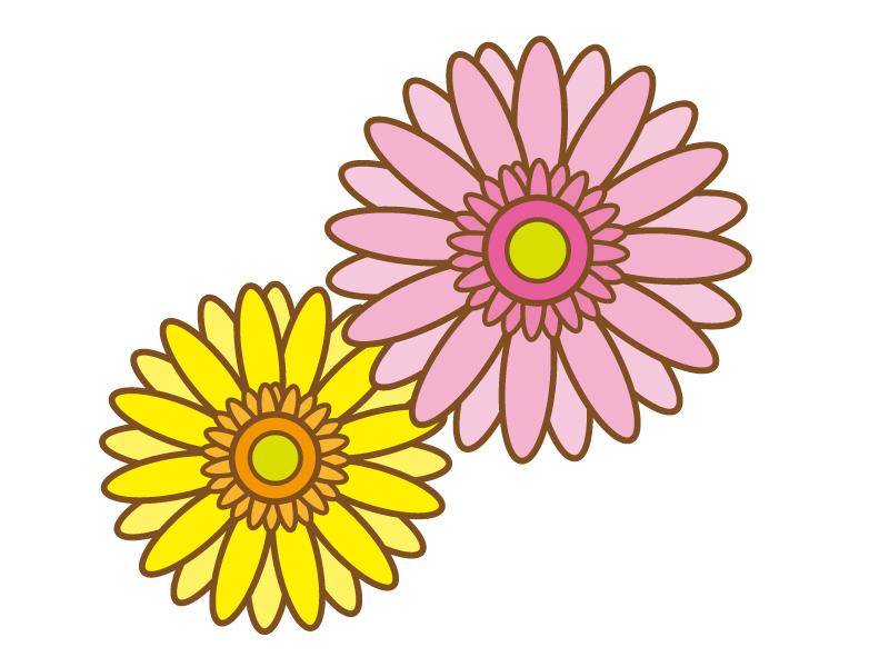 黄色とピンク色のガーベラのイラスト