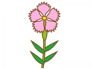 ピンク色のナデシコ(撫子)のイラスト