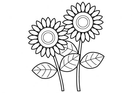 ひまわり(二輪)のぬりえ(線画)イラスト素材