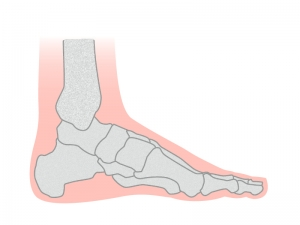 足の骨のイラスト