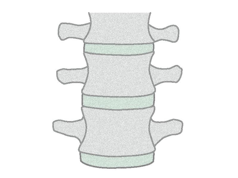 腰髄のイラスト