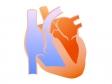 心臓の断面図のイラスト