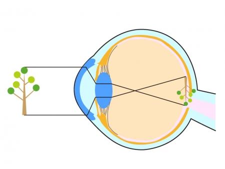 横から見た目玉(眼球)のイラスト02