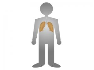 人体と肺のイラスト