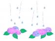 雨が降るっているところに咲くの紫陽花のイラスト
