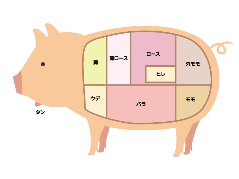 豚肉の部位のイラスト