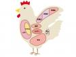 鶏肉の部位のイラスト