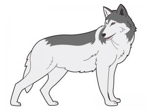 オオカミ・狼のイラスト