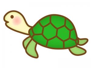かわいい亀のイラスト