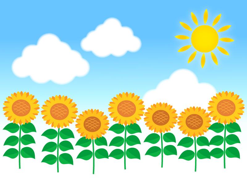 太陽とひまわり畑のイラスト