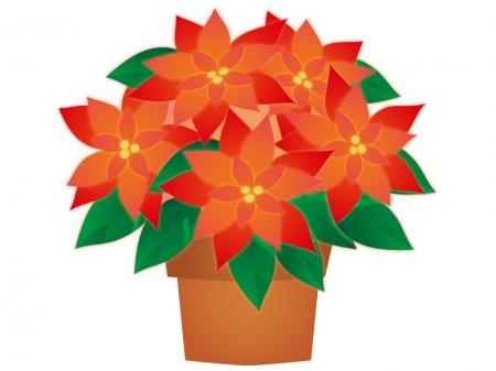 ポインセチアの鉢植えのイラスト