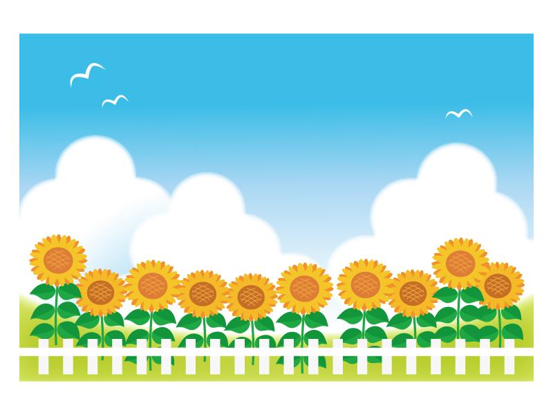 文字無し・ひまわり畑と入道雲の残暑見舞いテンプレートイラスト