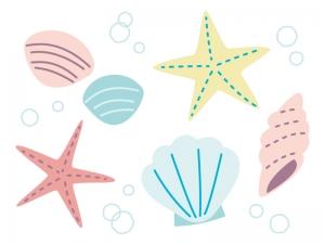 貝殻・ヒトデのイラスト