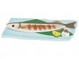 お皿に盛りつけた焼きサンマ(秋刀魚)のイラスト