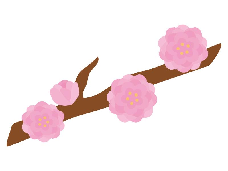 桃の花のイラスト