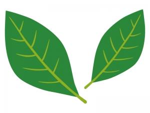 シンプルな葉っぱのイラスト