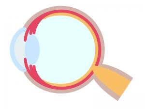 目・瞳のイラスト03