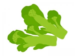 食用の菜の花(野菜)のイラスト