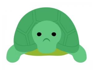 亀のイラスト02
