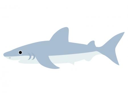 鮫のイラスト02
