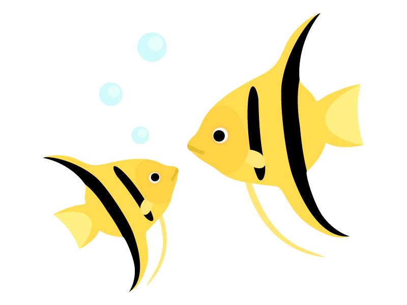 熱帯魚・エンゼルフィッシュのイラスト