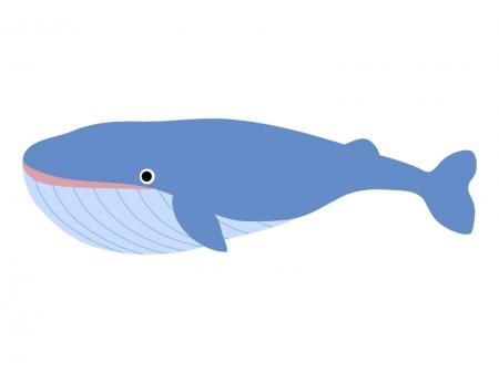 シロナガスクジラの画像 p1_24
