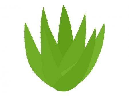 アロエの茎のイラスト