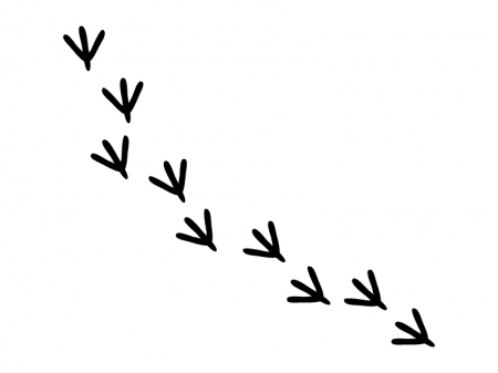 鳥の足跡のイラスト