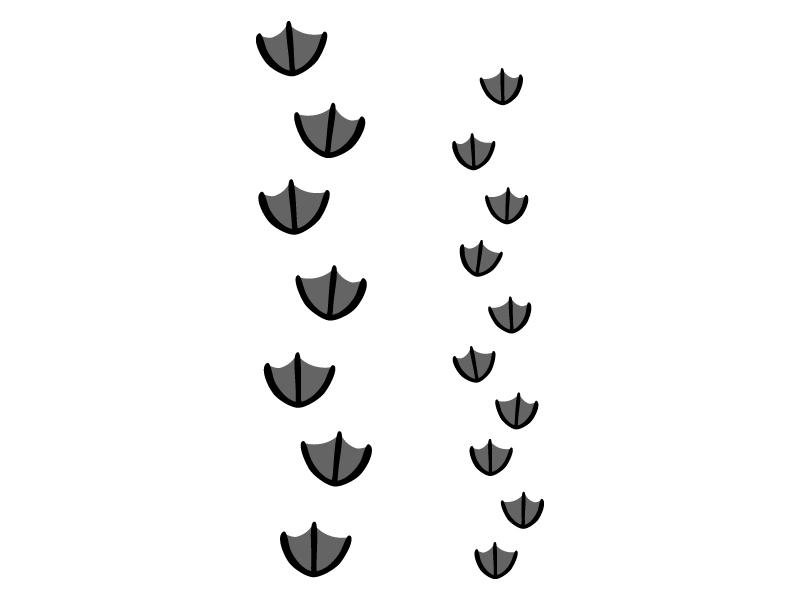 鳥の足跡(水鳥系)のイラスト