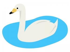 白鳥のイラスト