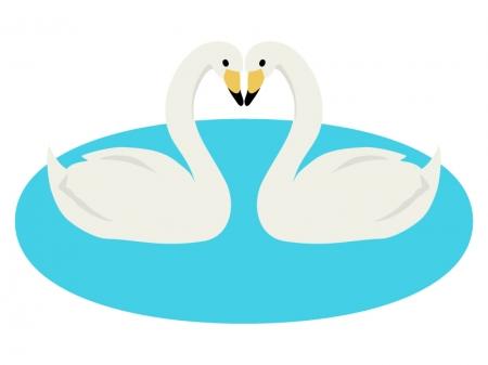 二羽の白鳥のイラスト
