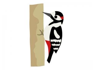 キツツキ(アカゲラ)のイラスト