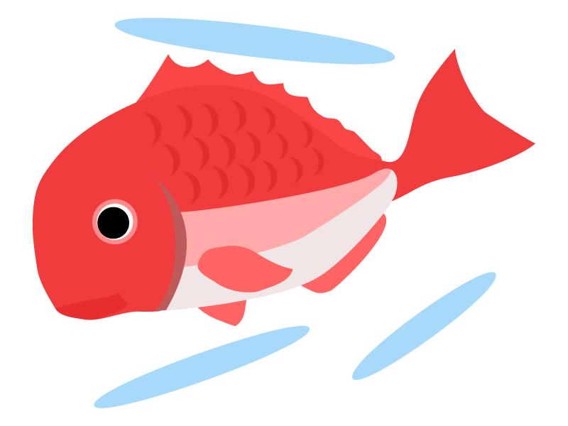 鯛のイラスト02