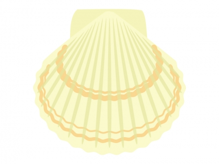 ホタテ貝のイラスト