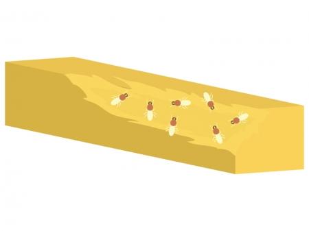 シロアリが木を食べているイラスト