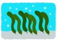 海藻・昆布のイラスト