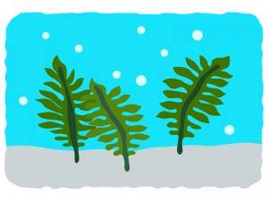 海藻わかめのイラスト イラスト無料かわいいテンプレート