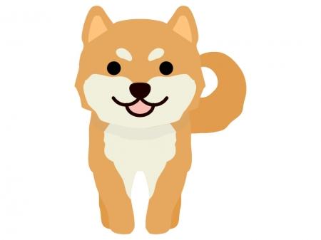 柴犬のイラスト02